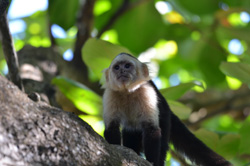 Nationalparks Costa Rica - Central Pacific