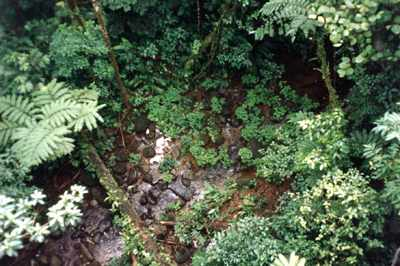 Costa Rica: Rainforest Aerial Tram - View