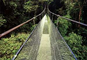 Costa Rica - Monteverde Skywalk