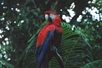 Costa Rica hotels - Carara National Park