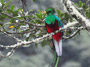 Costa Rica vacation special - Quetzal bird