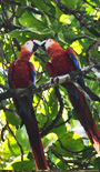 Costa Rica green vacation packages