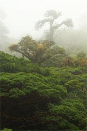 Bosque Eterno de los Niños - Bajo del Tigre, Monteverde