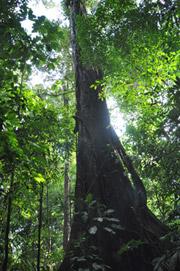 Flora del Bosque Lluvioso - Parque Nacional Corcovado