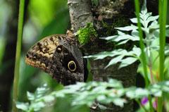 La Marta Refugio de Vida Silvestre, Costa Rica