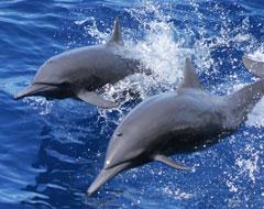 MarViva - Delfines
